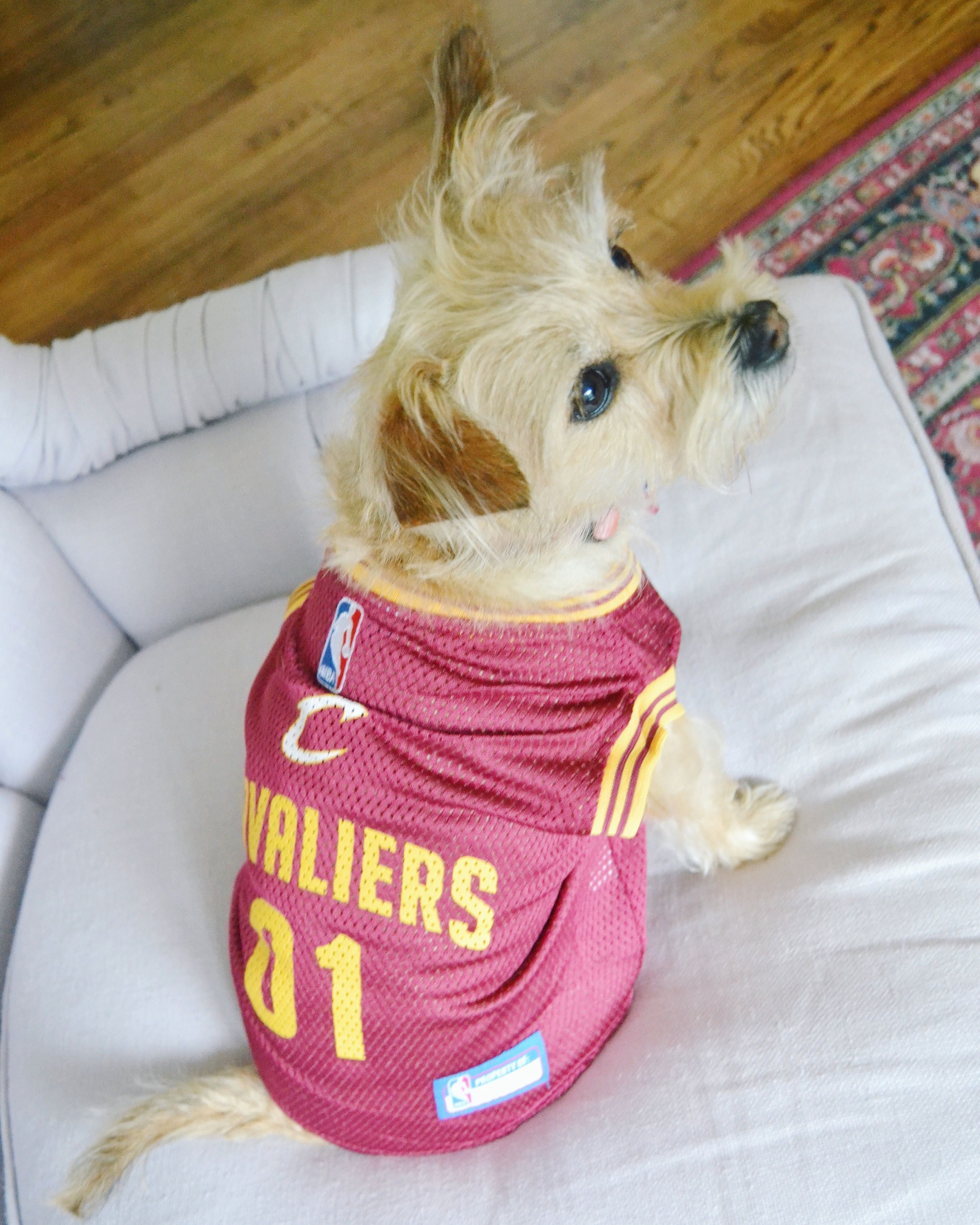 Cleveland cavaliers dog jersey lebron james dog jersey tracy cleveland cavaliers dog jersey lebron james dog jersey solutioingenieria Choice Image
