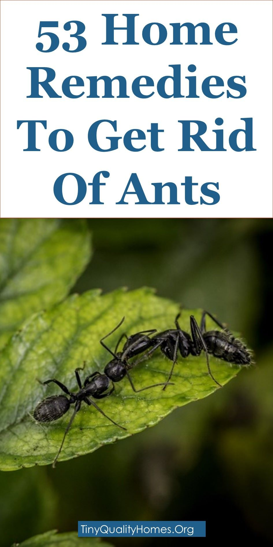 You May See Ants Starting To Enter Your Home And Garden Around Mid To Late Spring However Ant Infestation Get Rid Of Ants Rid Of Ants Home Remedies For Ants