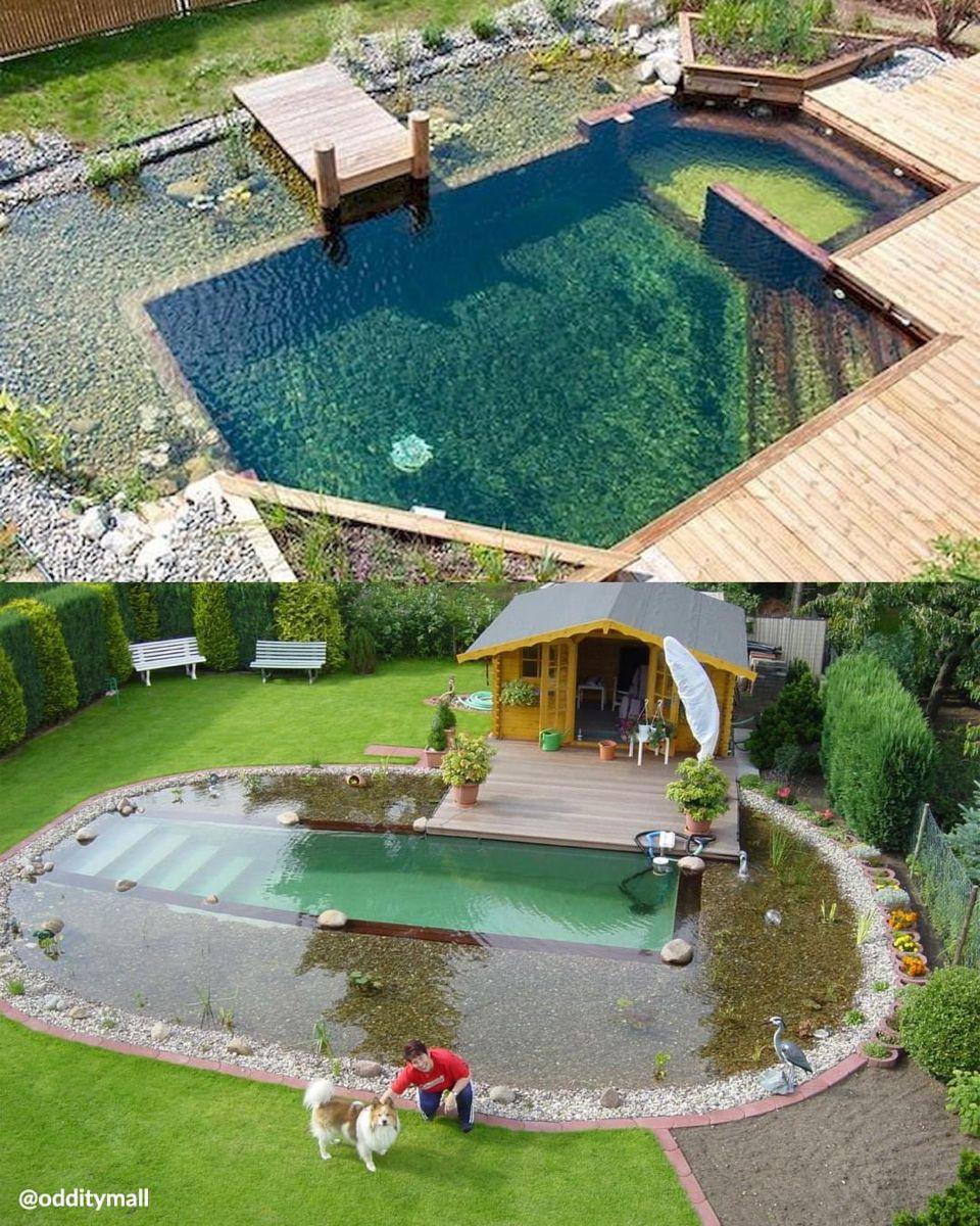 Natural Pool Piscines Faites Maison Piscine Bois Piscine Naturelle Backyard diy natural pool