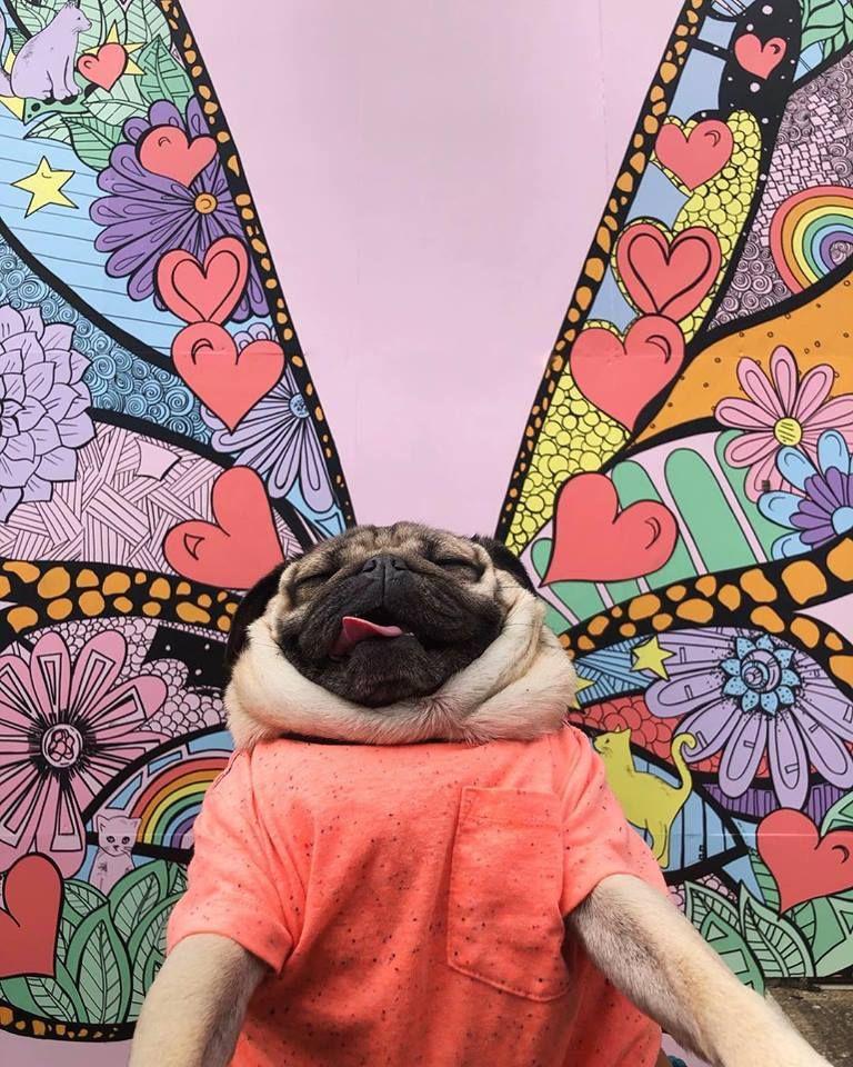 Pug Is Very Smart Dog Pug Lover Pugs Nashville Nashville Murals
