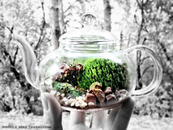 Teapot Terrarium / Live Moss Lichens / Unusual Unique Terrarium Gift
