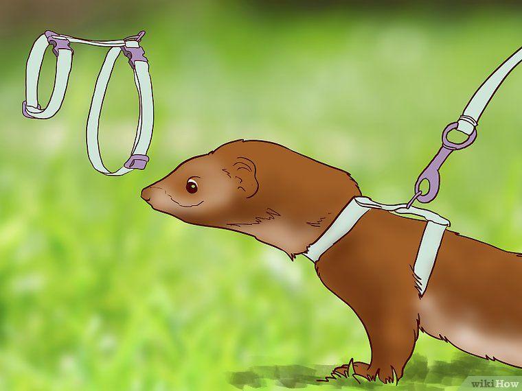 how to train a dog to walk on a leash wikihow
