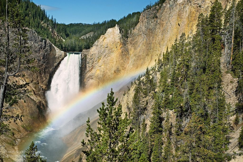 Lower Falls and Rainbow from Red Rock Point at Yellowstone