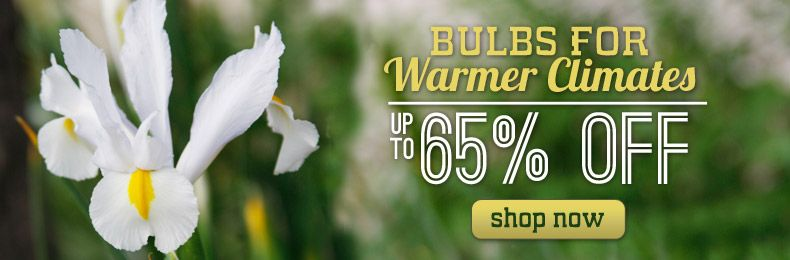 bulbs for warmer climates, with no winters