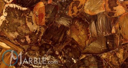 Desert Petrified Wood gemstone - CloseUp Photo