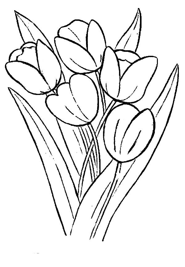 Growing Tulips In A Farm Coloring Page