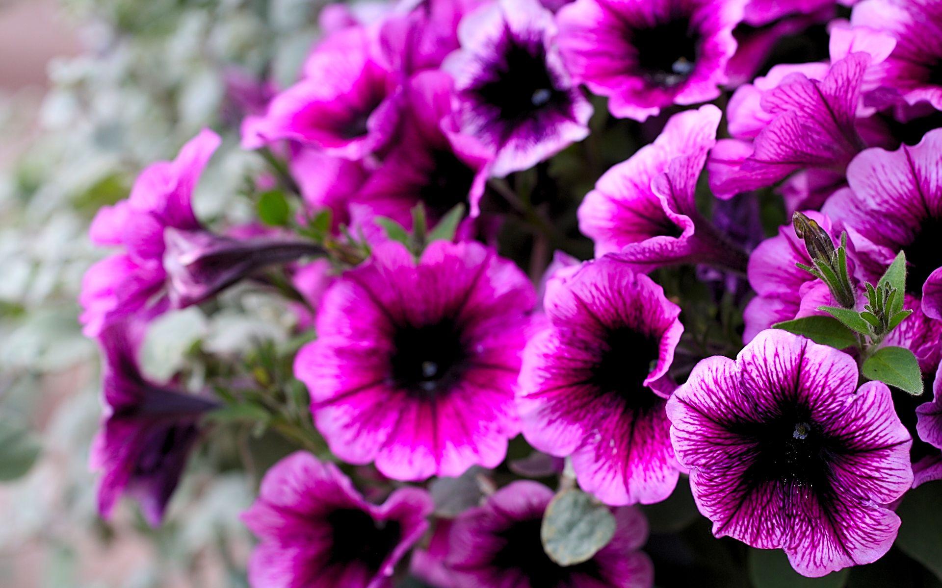 Purple flowers Purple flower pictures, Purple flowers