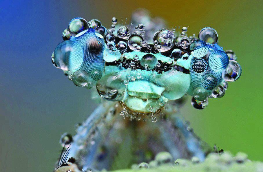 Macrofotografia de um inseto coberto com orvalho.  Créditos pela Imagem: Ondrej Pakan.    Via: Science Is Awesome.    Postado por Douglas Rodrigues.