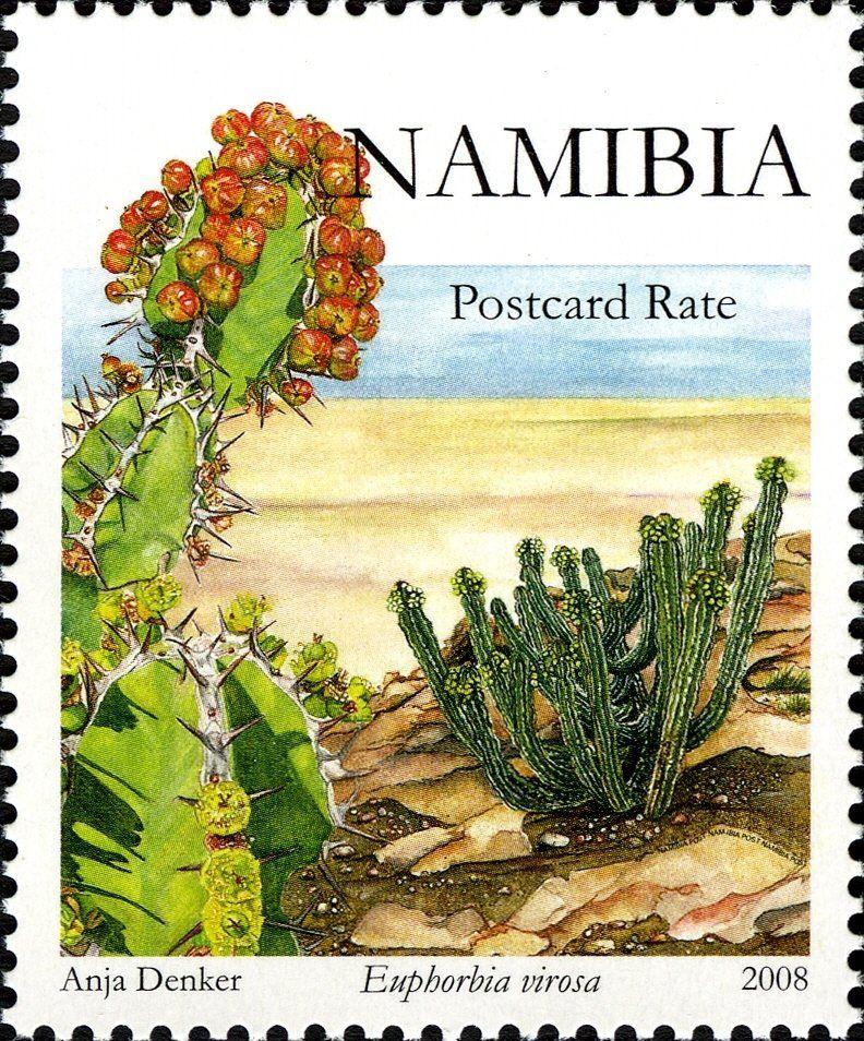 Stamp Euphorbia Virosa Namibia Euphorbia S Of Namibia Mi Na 1269 Yt Na 1147 Namibia Flower Stamp Stamp