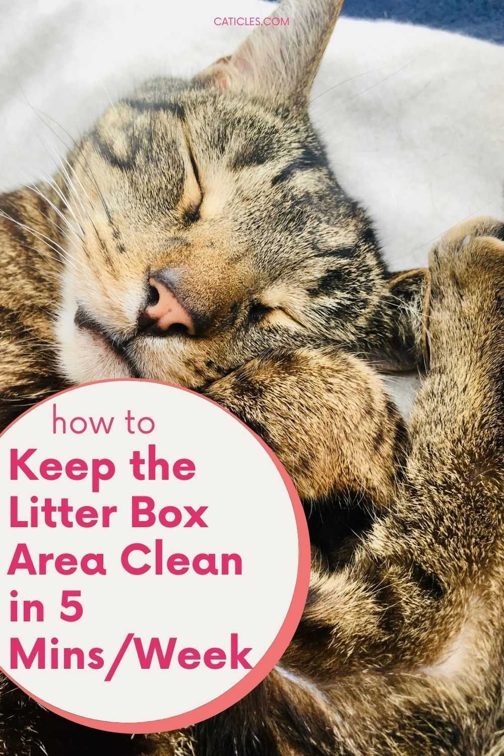 How To Keep Litter Box Area Clean Easily In 5 Mins Week In 2020 Litter Box Cat Parenting Cat Life Hacks