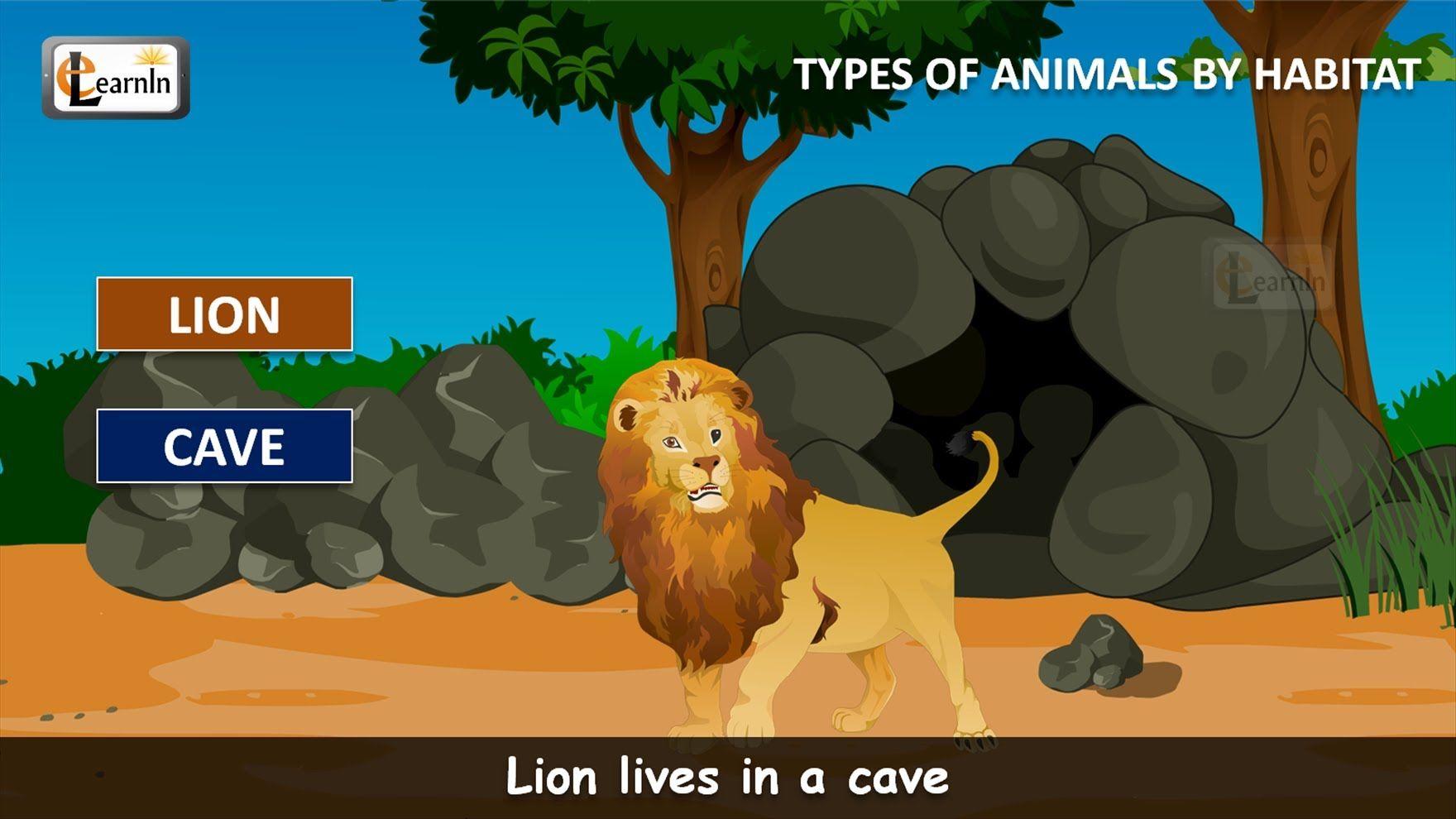 Habitat Of Animals