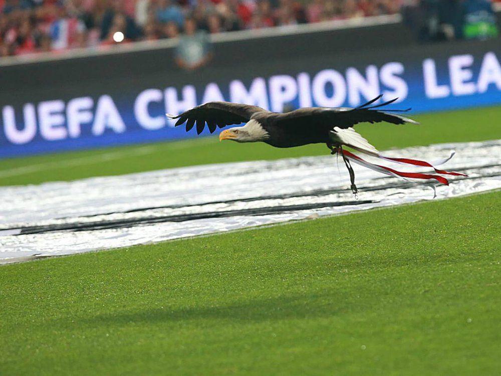 Águia Vitória, SL Benfica