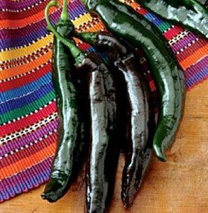 """Hole Mole Pasilla Pepper 4 Plants - Tangy by Hirts: Pepper Plants. Save 25 Off!. $5.99. Use fresh, or for sauces, or for pickling!. 2007 All-America Selection!. The Pasilla Pepper You Need for Authentic Mexican Cuisine!. This is a """"Pre-Order"""". Shipping begins on March 1st! Disregard the initial shipping email if purchased before your shipping date. A tracking number will migrate to your account when the plants actually ship.. Mildly hot at 700 Scovilles, with a nutty, tangy fl..."""