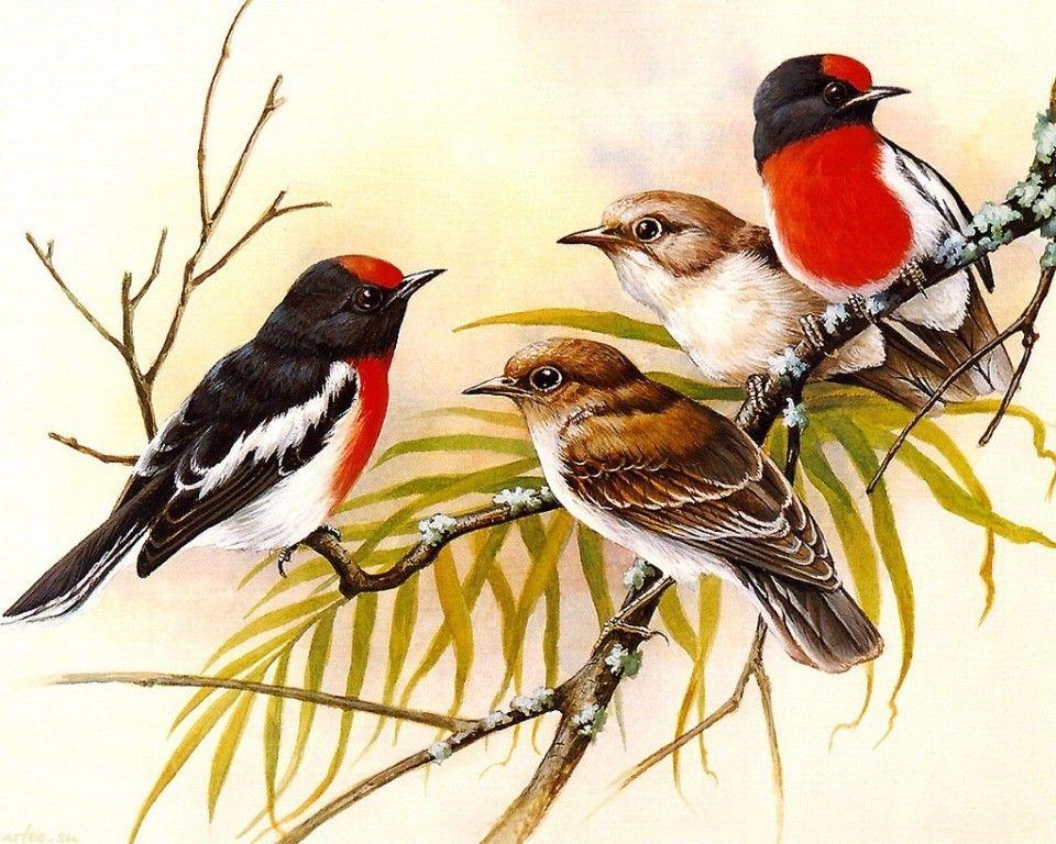 материал картинки с изображениями птиц подвязывать огурцы балконе