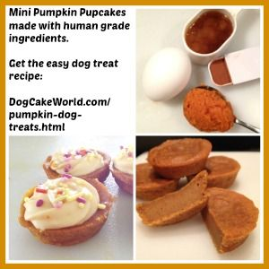 Pumpkin Dog Cupcakes Easy Dog Treat Recipes Dog Treat Recipes