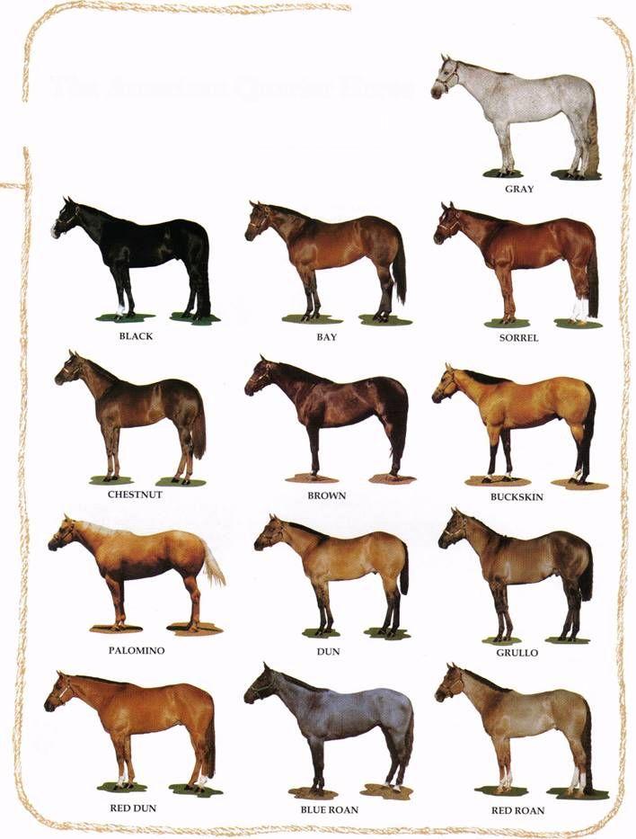 Different Horse Colors Horse Color Chart American Quarter Horse Quarter Horse