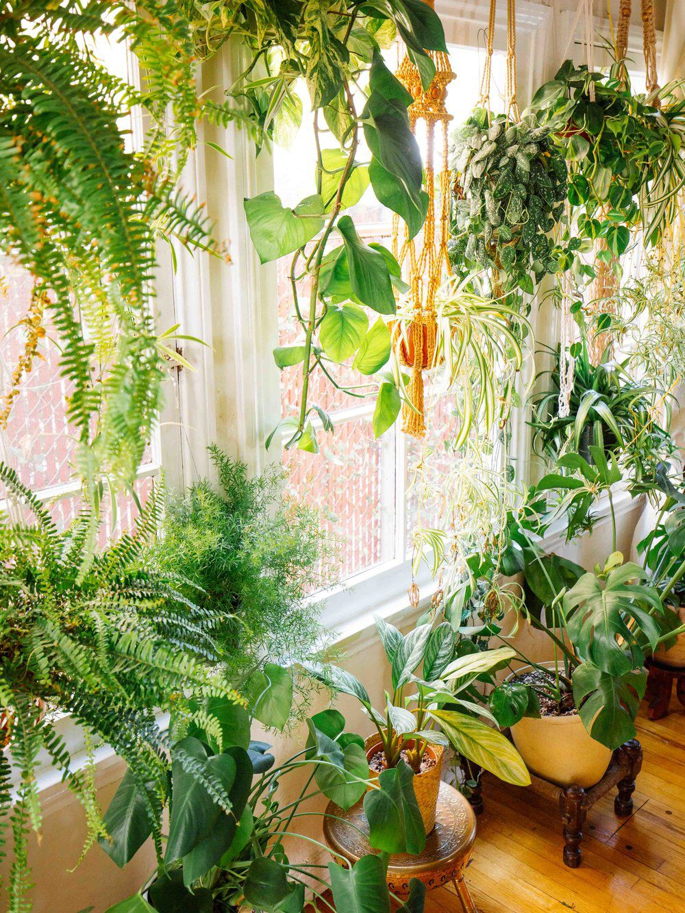 » Plant Life » Indoor Houseplants » Boho Decor » Jungalow 400 x 300