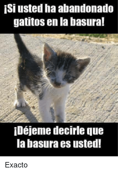 Memes Chistes Humor Funny Invequa Gato Gatos Memes En Espanol Memes De Gatos Memes Funny Grumpy Cat Memes Animal Memes Grumpy Cat Humor