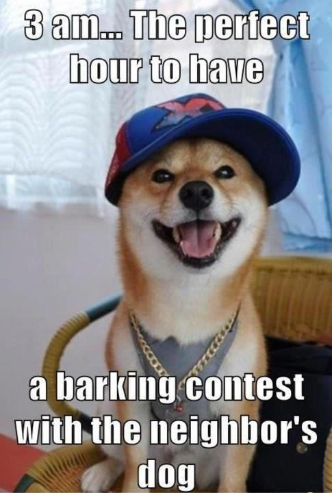 Barking Contest Meme Slapcaption Com Funny Animals Funny Dog Pictures Funny Dogs