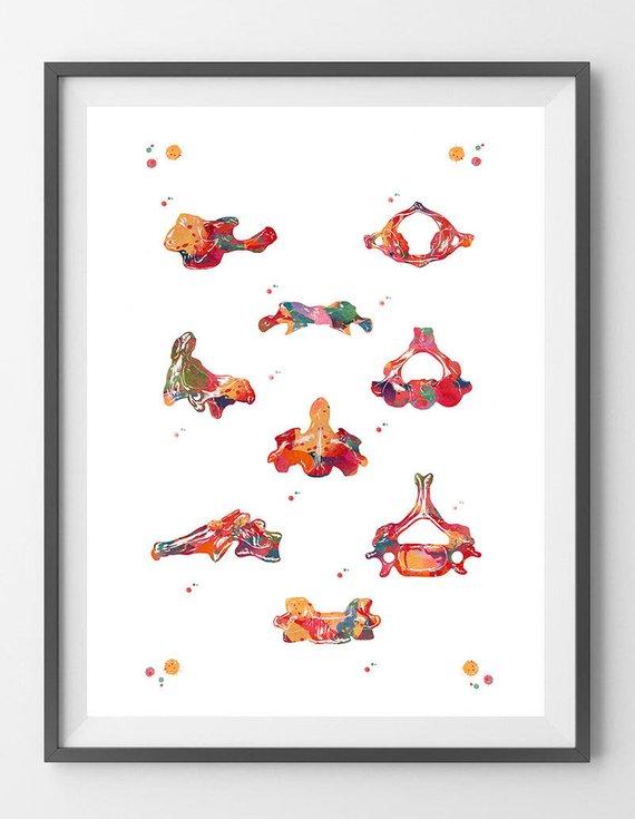 Cervical vertebrae watercolor print anatomy art poster atlas C1 axis ...