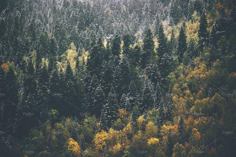 Autumn Coniferous Forest Landscape Forest Landscape Landscape Photos Nature Photos
