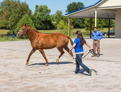 """The Winning Edge Blog: The DIY Test for SI Disease - TheHorse.com 