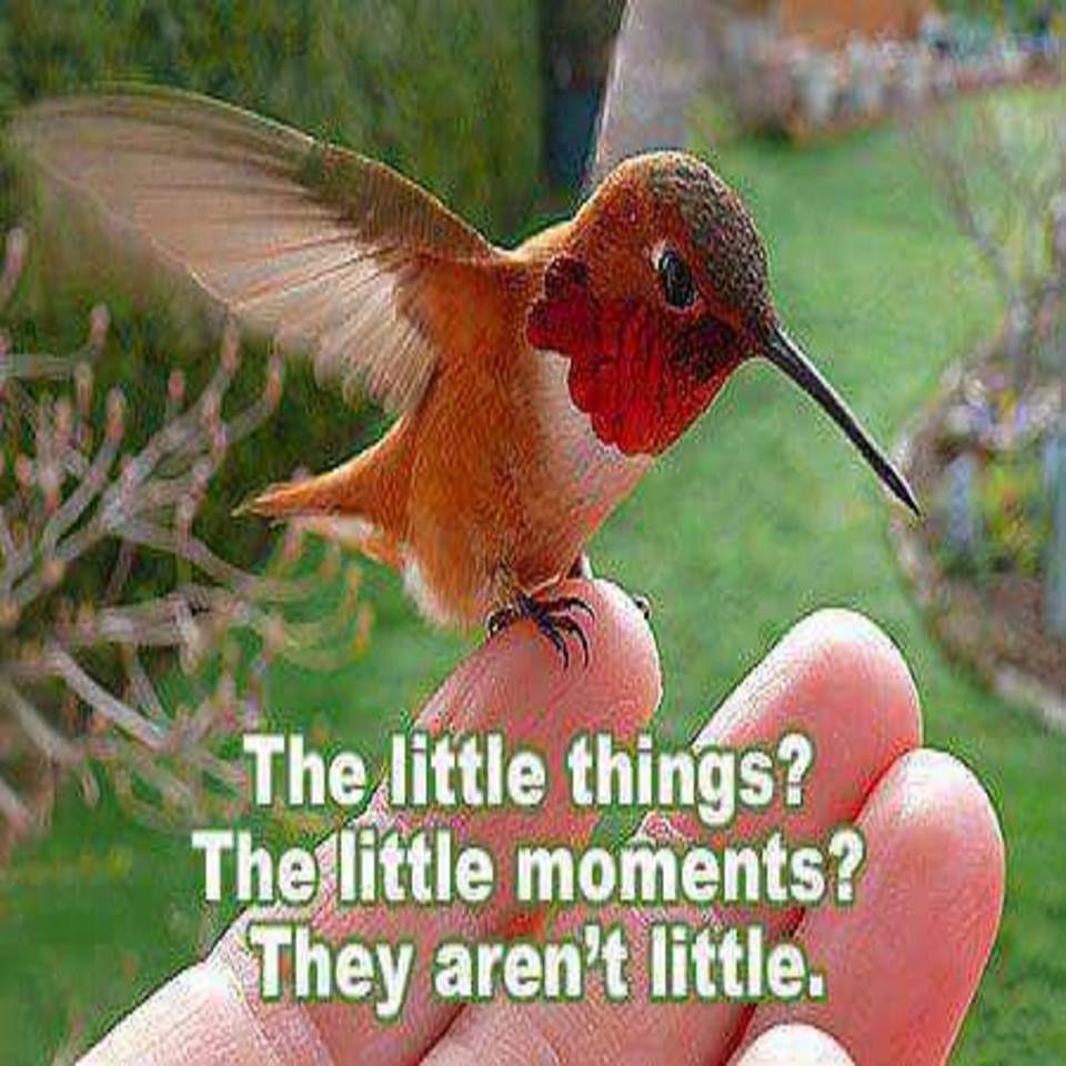 THE LITTLE THINGS Pretty birds, Beautiful birds