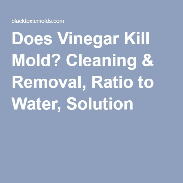 Does Vinegar Kill Mold Cleaning Amp Removal Ratio To Water