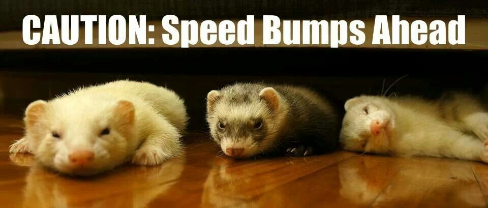 Bump Cute Ferrets Ferret Fur Kids