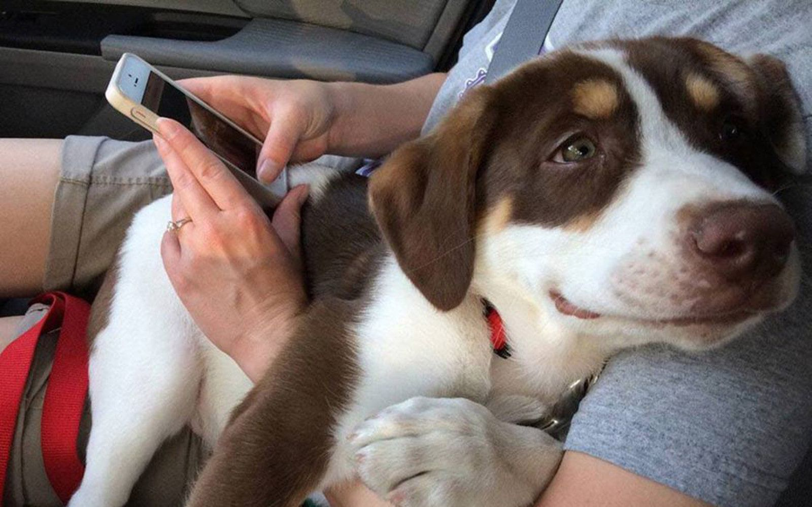 Incredible Face On Pup Who Was Just Adopted Shows What It Means To