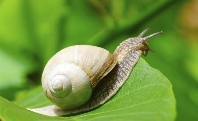 cómo eliminar babosas y caracoles del jardín | imujer, eliminar y