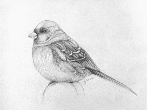 How to draw a bird step by step easy drawings