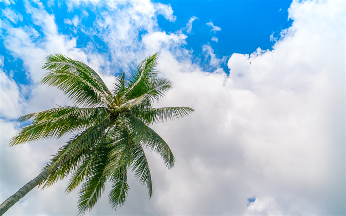 Download Wallpapers Coconuts Palm Blue Sky White Clouds Palm Leaves Besthqwallpapers Com Feuille Palmier Meilleurs Gateaux De Mariage Ciel Bleu