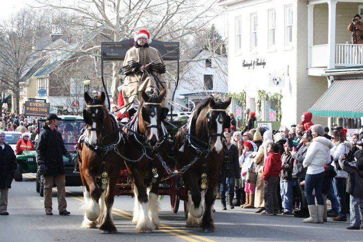Christmas In Middleburg.The Shire Horses In The Christmas In Middleburg Parade 2010