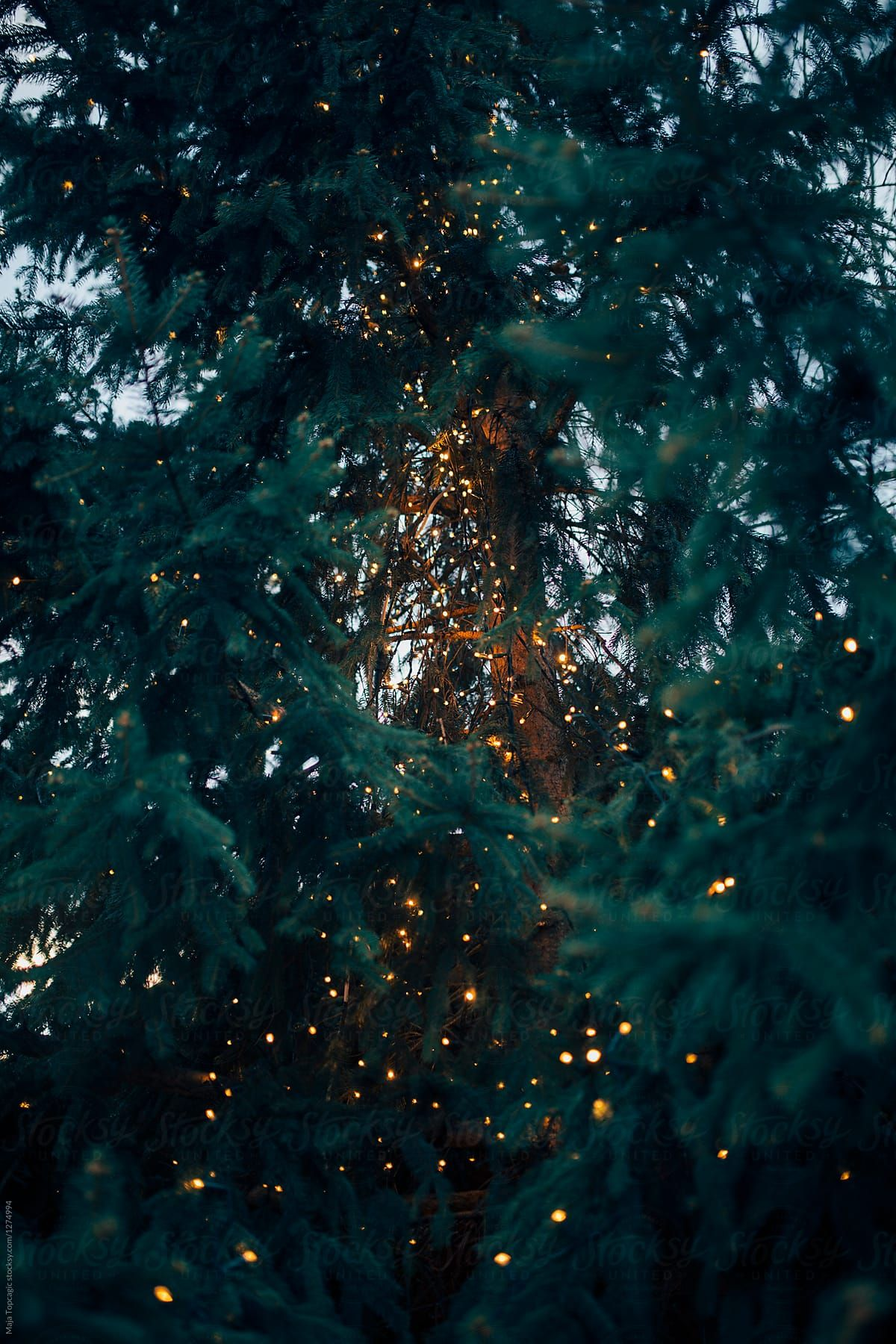 Beautiful Little Holiday Market | Stocksy United #fallwallpapers