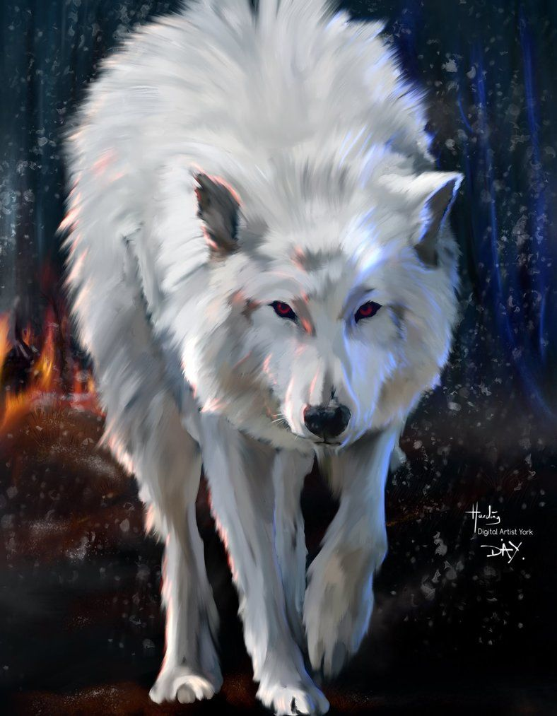 Here Is Another Painting Of The Dire Wolf Ghost From Hbo Tv Series Of Game Of Thrones First Time I Done A Full Wolf As I N Dire Wolf Direwolf Art