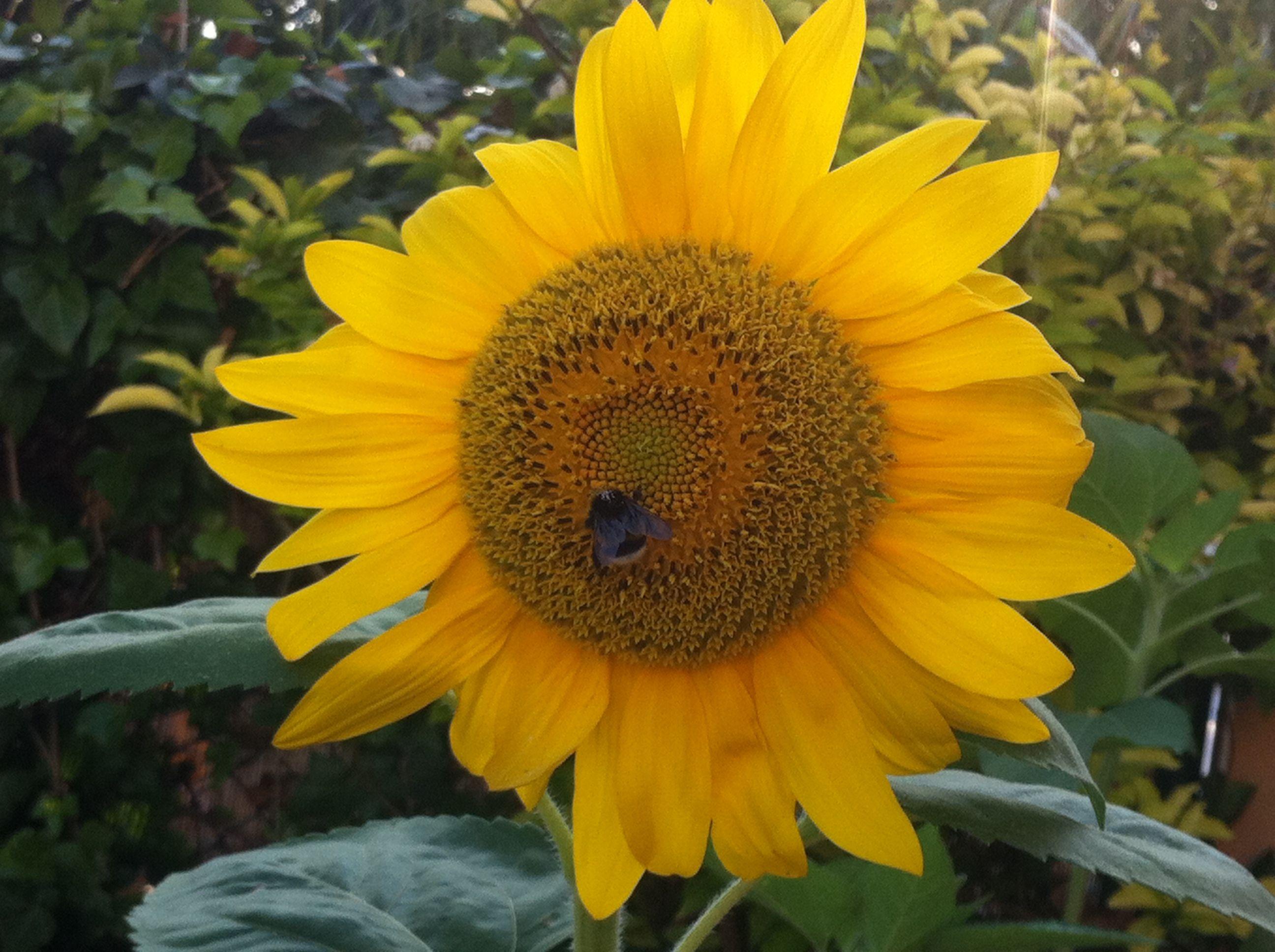 La flor de la vida!!