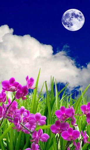 3D flowers HD Live Wallpaper for (Android) Free Download on MoboMarket