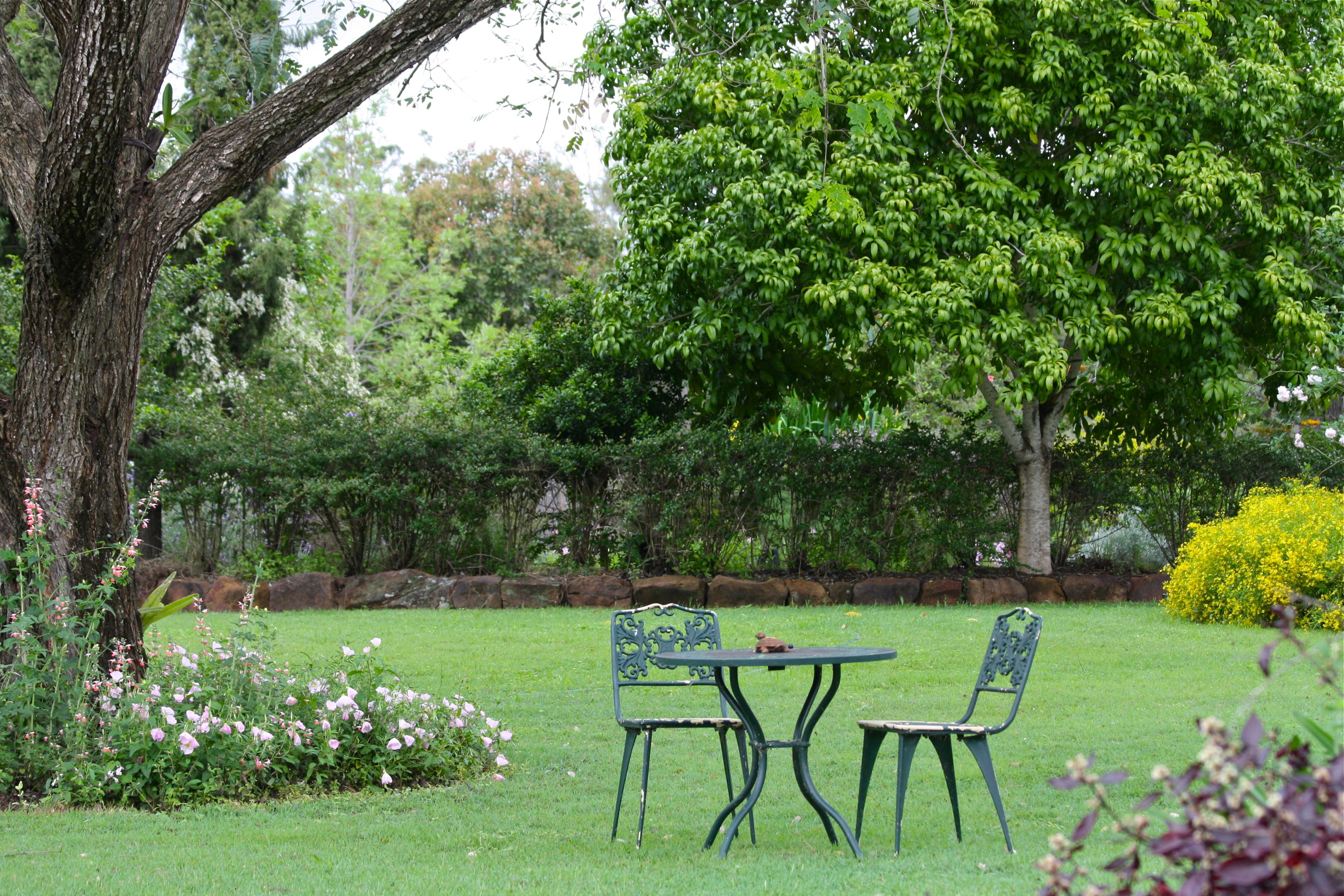 Garden landscape trees  lawn with trees  Mendocino landscaping ideas  Pinterest