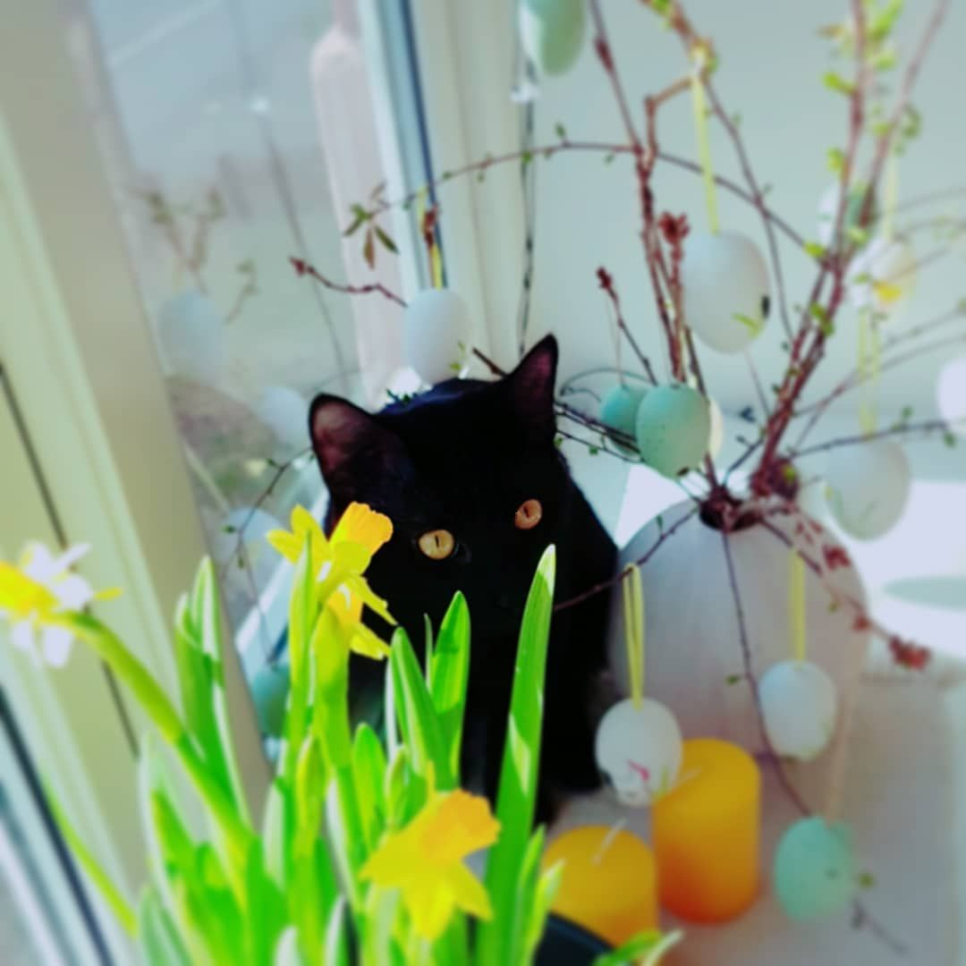 #mycatfromhell #mycat #easterdecoration #easterdecor #easter #home#interiørdetaljer #april #mystyle #interior4all...