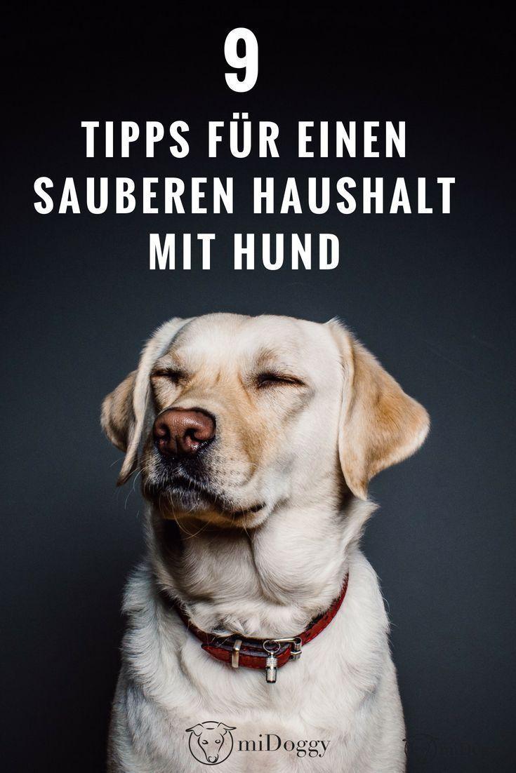 Meine 9 Tipps für einen sauberen Haushalt mit Hund