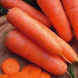 Carrot Plant How To Grow Care With Images Growing 640 x 480