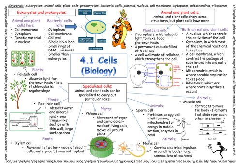 New Aqa Gcse Cells Revision Poster 2018 Exam Secondary Gcse