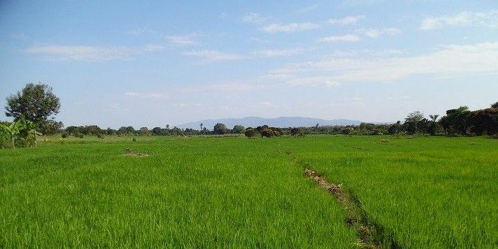 Farms in Moshi, Tanzania