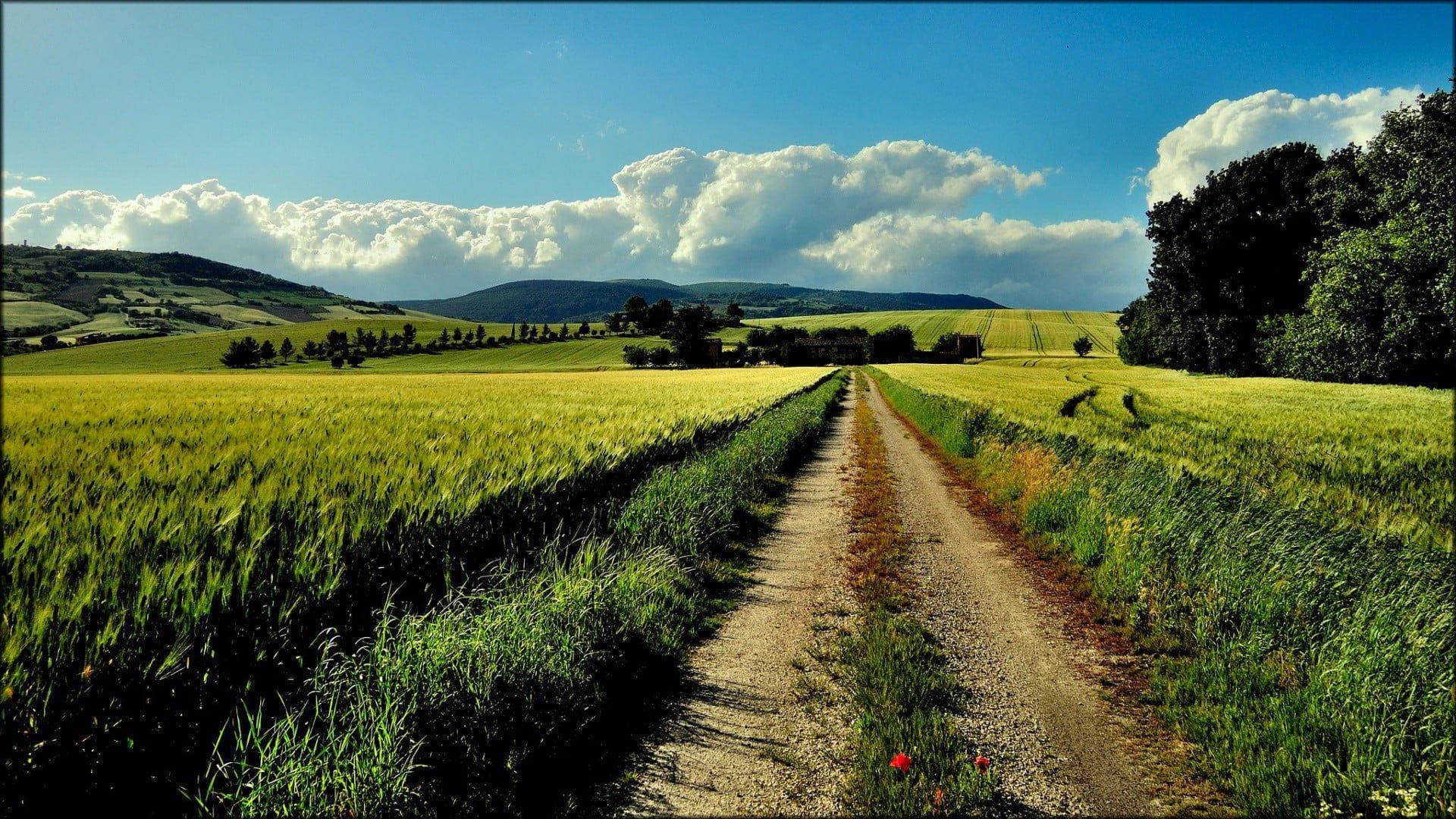 Green Grass Field Nature Landscape Path Farm Dirt Road 1080p Wallpaper Hdwallpaper Desktop Landscape Country Roads Grass Field