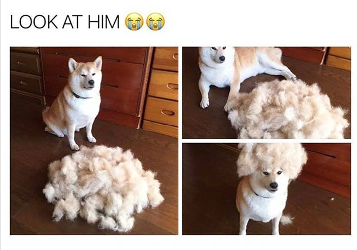 Cute Funny Memes For Him : Cute funny animal memes that will make you smile funny animal