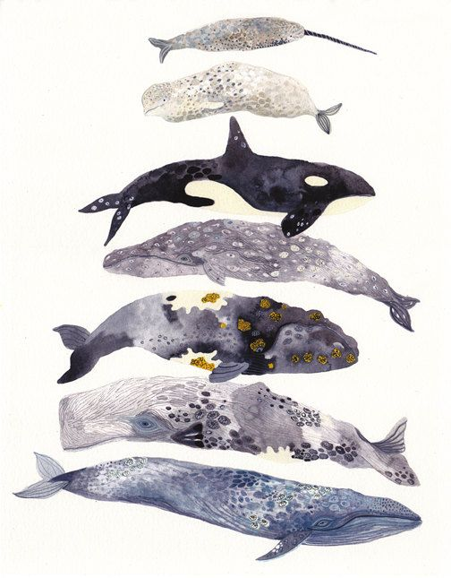 six whales stacked archival print by unitedthread on etsy