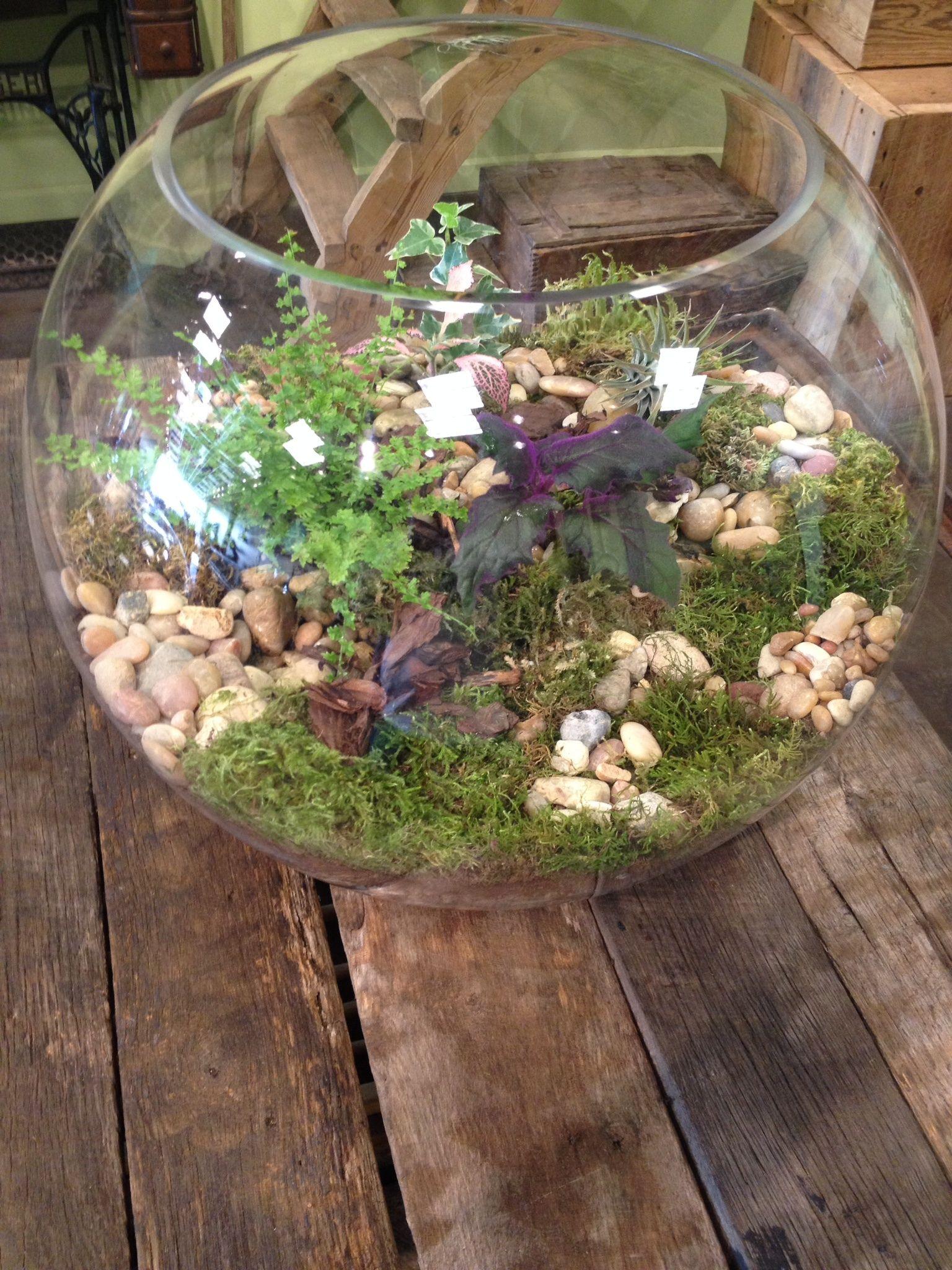 Large Fish Bowl Terrarium  Terrariums  Pinterest  Terraria, Gardens and Pl -> Terrarium Table Basse