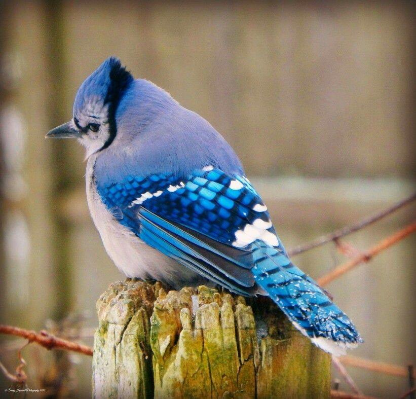 #PrettyBird