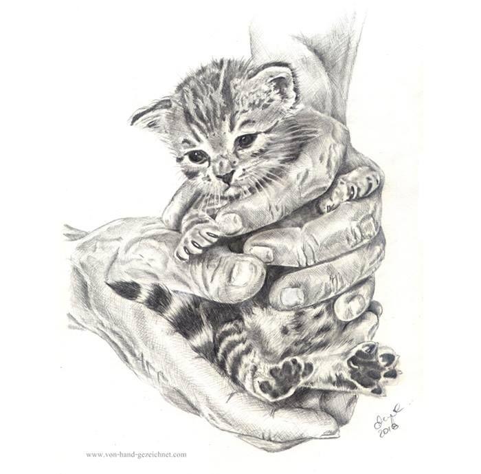 Baby Katze Katzchen Zeichnung Bleistift Bleistiftzeichnungen Zeichnung Bleistift